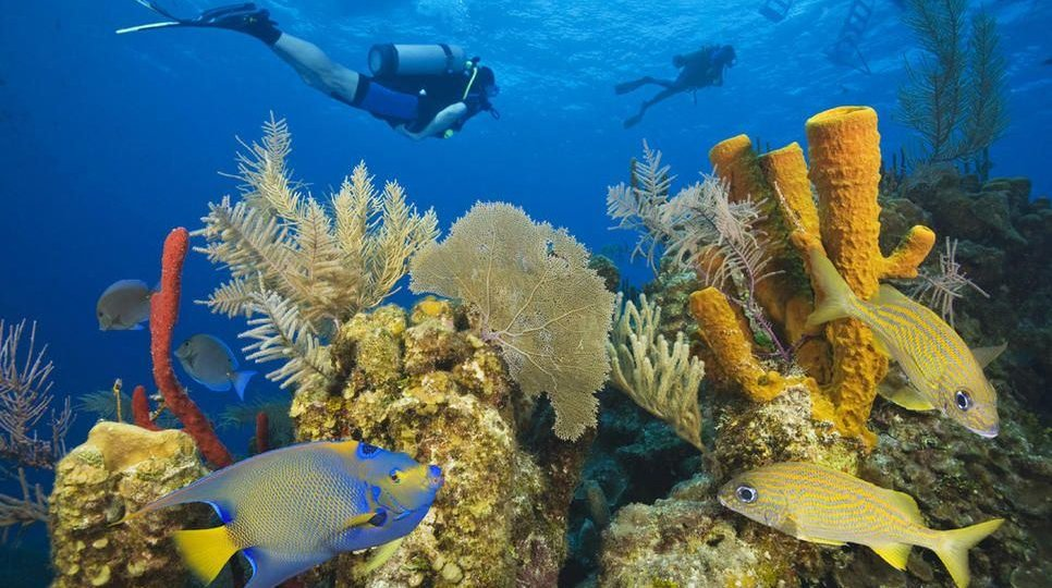 belize-barrier-reef-snorkeling-and-scuba-diving