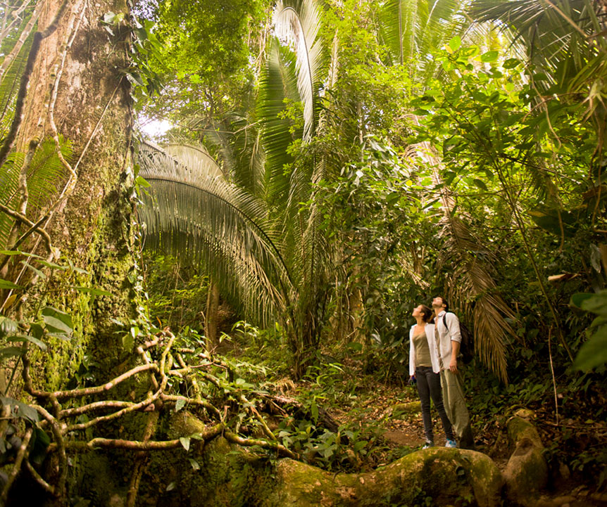 belize-adventure-tours-jungle-nature