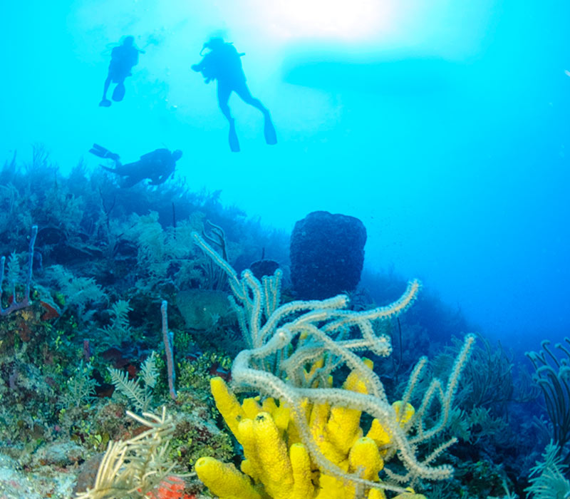 Belize Diving Tours-3