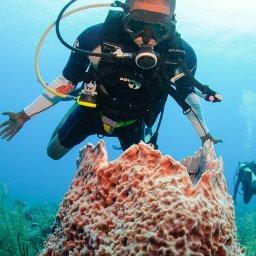 Placencia Belize All Inclusive Dive Package