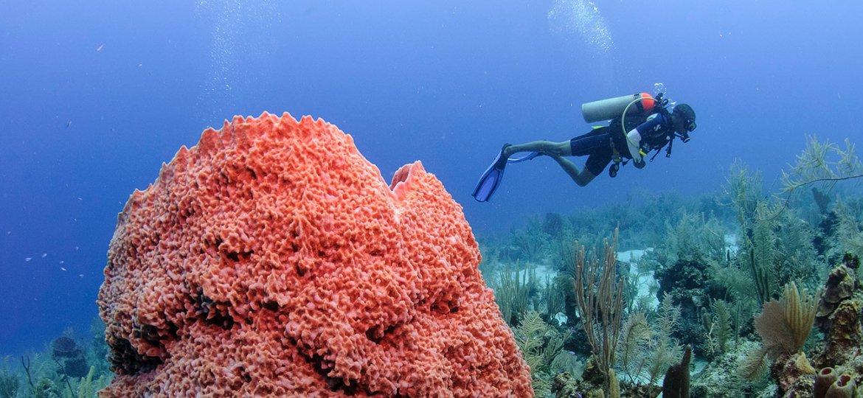 placencia belize scuba diving