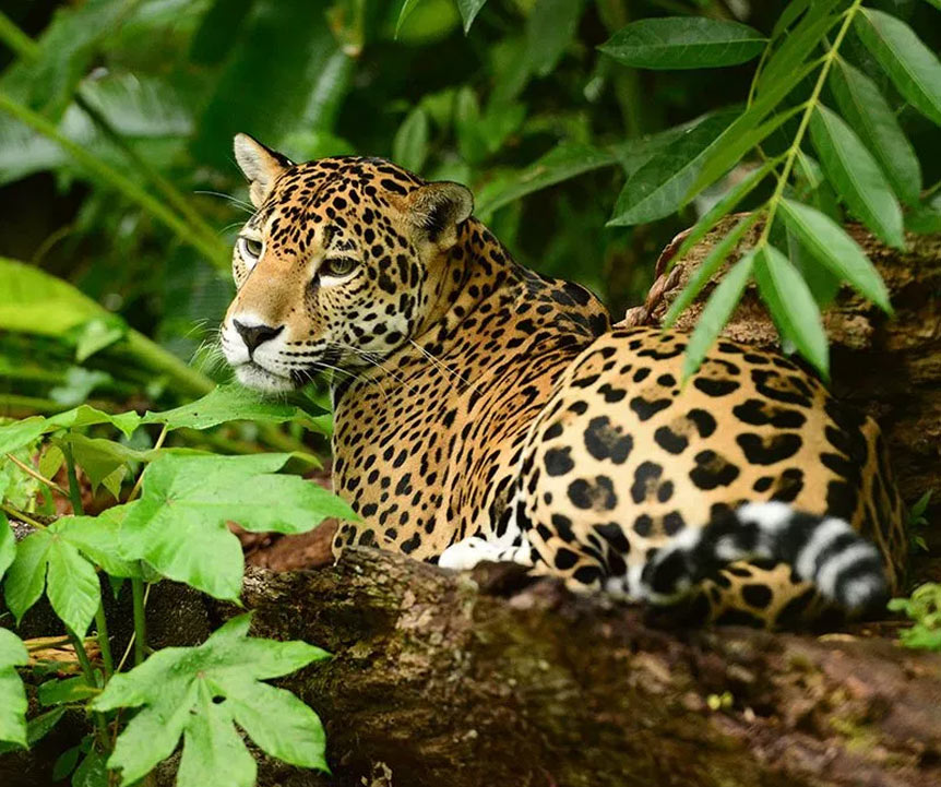 Belize Jaguar Preserve Tours