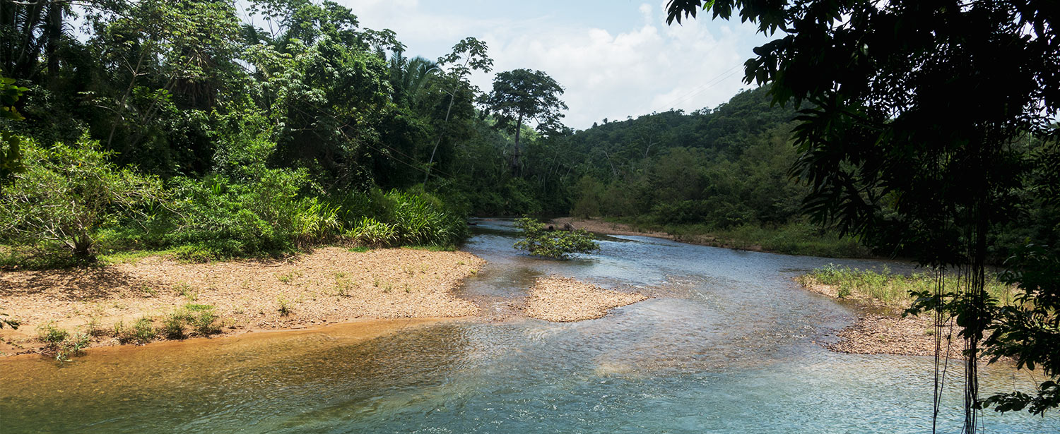 Belize Jungle & Nature Tours