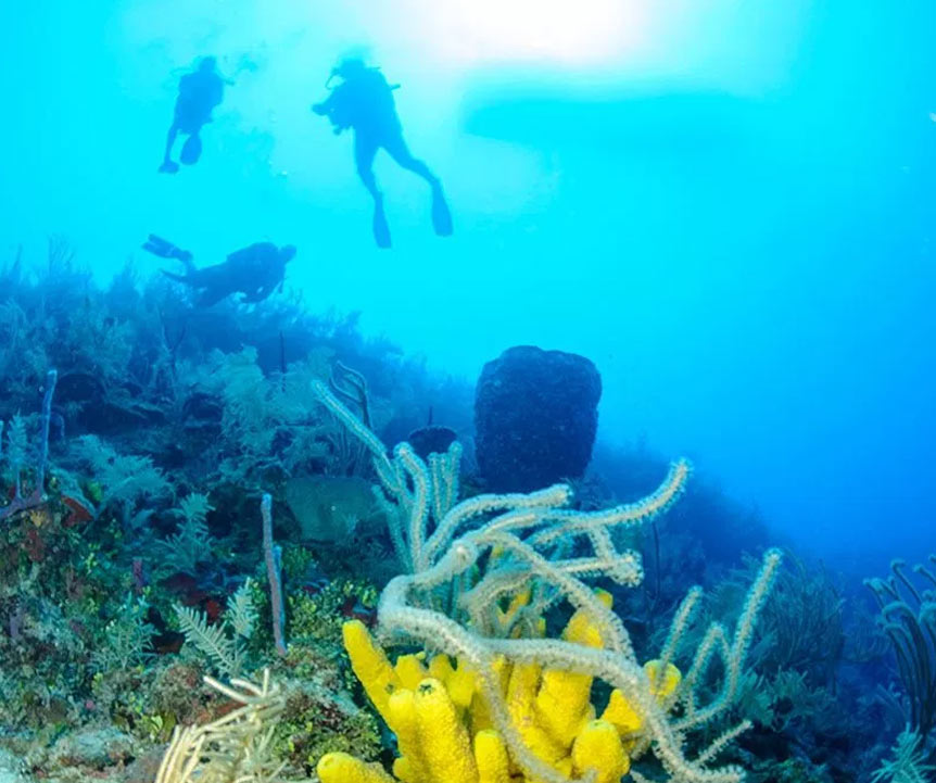 Belize Reef Diving Tours