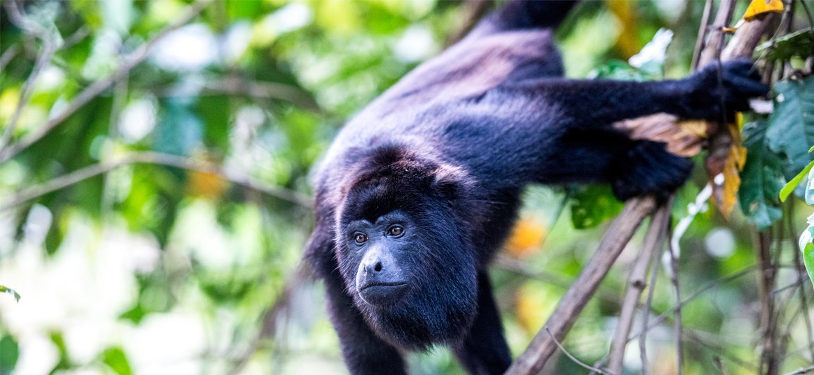 Belize Nature and Jungle Tours