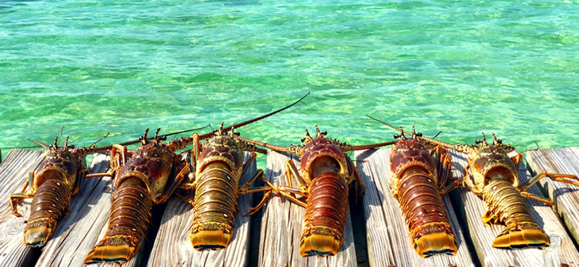 Placencia Belize Lobsterfest