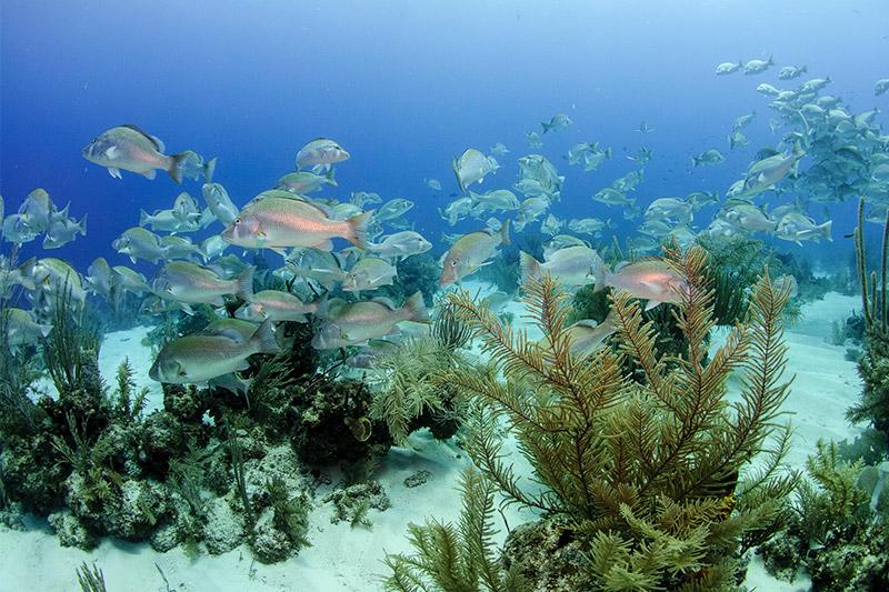 Belize Coral Reef
