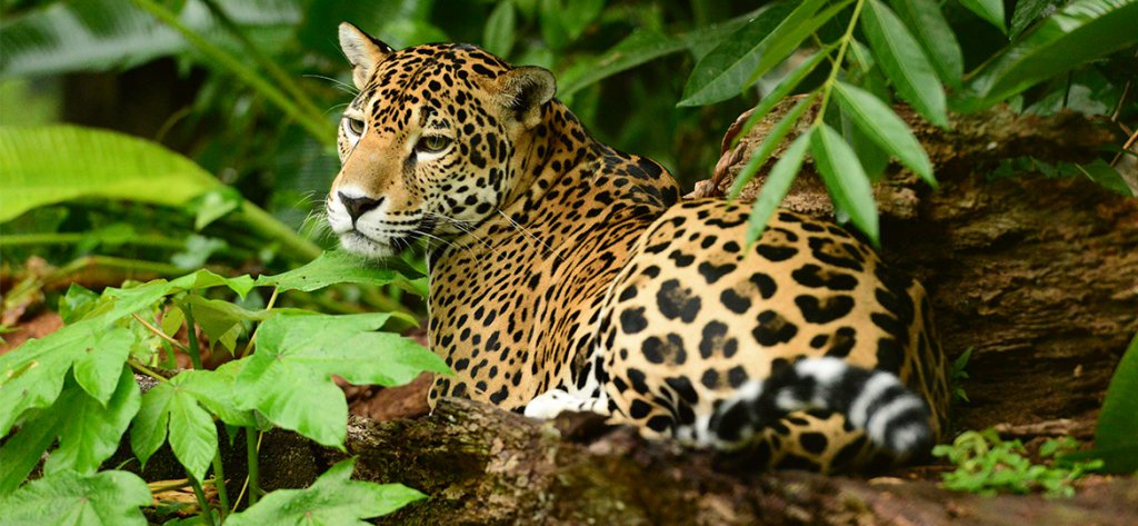belize wildlife adventures