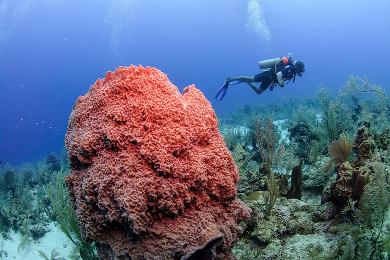 Diving in Glovers Reef Belize