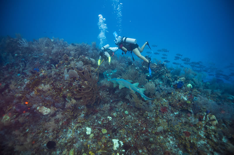 5 Reasons Why You Should Add Belize's Placencia To Your Scuba Diving Bucket List
